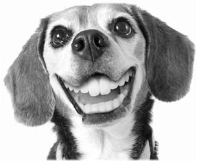contact-us-smiley-dog-
